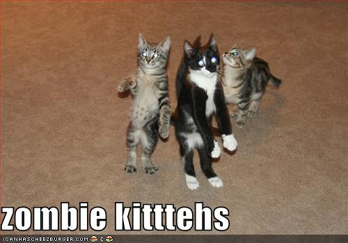 http://reformedpastor.files.wordpress.com/2009/01/funny-pictures-these-cats-are-zombies.jpg