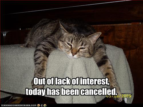 cat-cancels-today